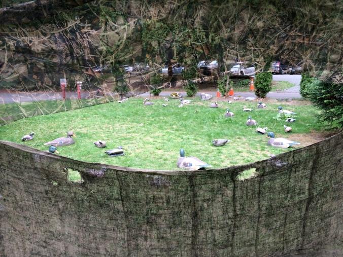 Washington Outdoor Women Duck Hunting 101