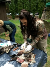 Removing feathers to start field dressing