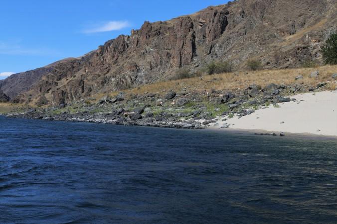 snake river bighorn sheep
